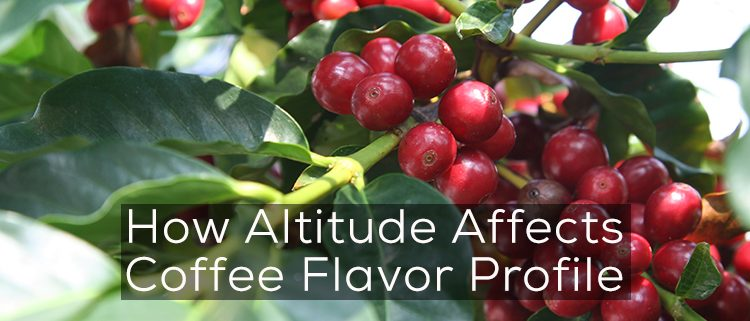 Altitude-Affect-Flavor-Coffee-Achilles-Coffee-San-Diego